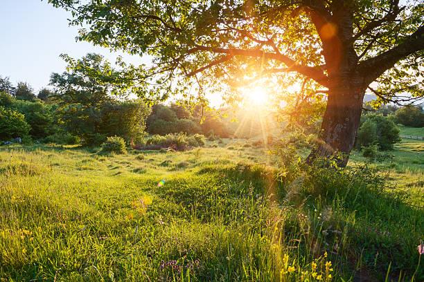 Wunderschönen Sonnenaufgang auf dem meadow – Foto