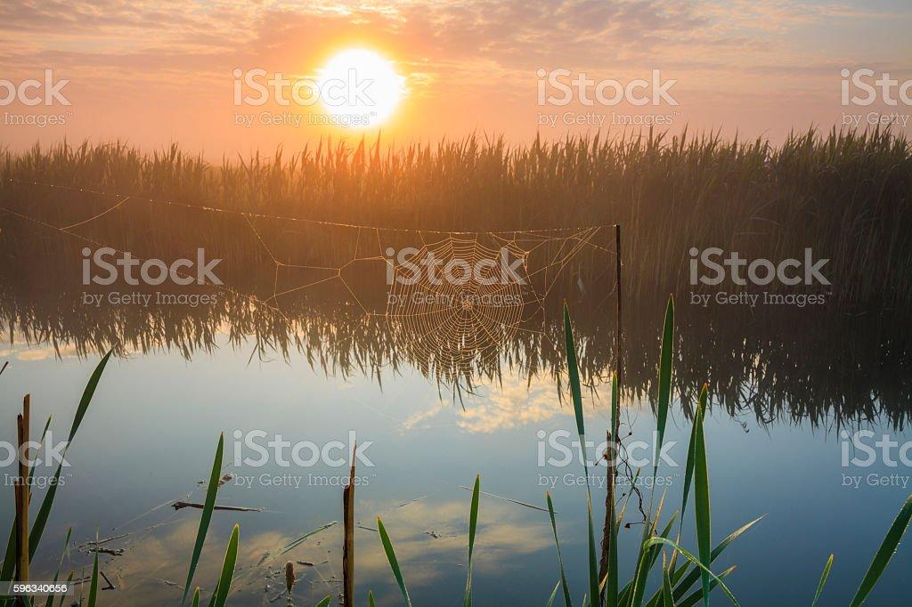 Beautiful sunrise landscape. Web in the sun. royalty-free stock photo