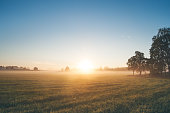 istock Beautiful sunrise over misty field an early summer morning 489976520
