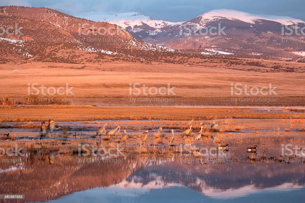 Beautiful sunrise reflection on Colorado Sandhill Cranes stock photo