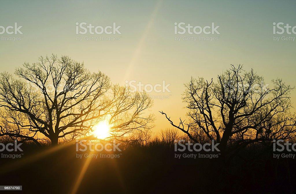 Bellissima alba. Raggi di sole. Mattina di primavera foto stock royalty-free