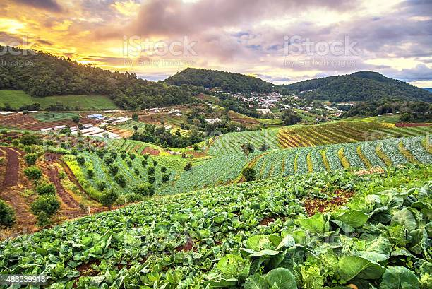 Beautiful Sunrise View At Cabbage Field In Mon Jam Mountain Stock Photo - Download Image Now