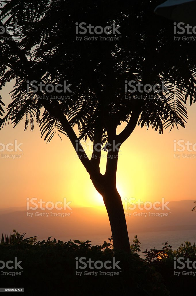 Beautiful sunset behind a tree stock photo