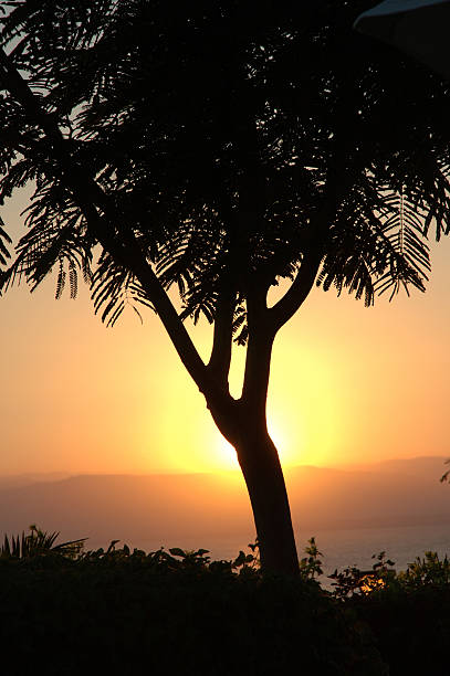 beautiful sunset behind a tree - alintal stock pictures, royalty-free photos & images