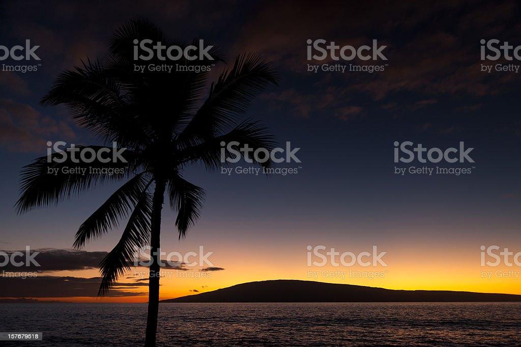 Beautiful Sunset Hawaiian Palm Tree royalty-free stock photo