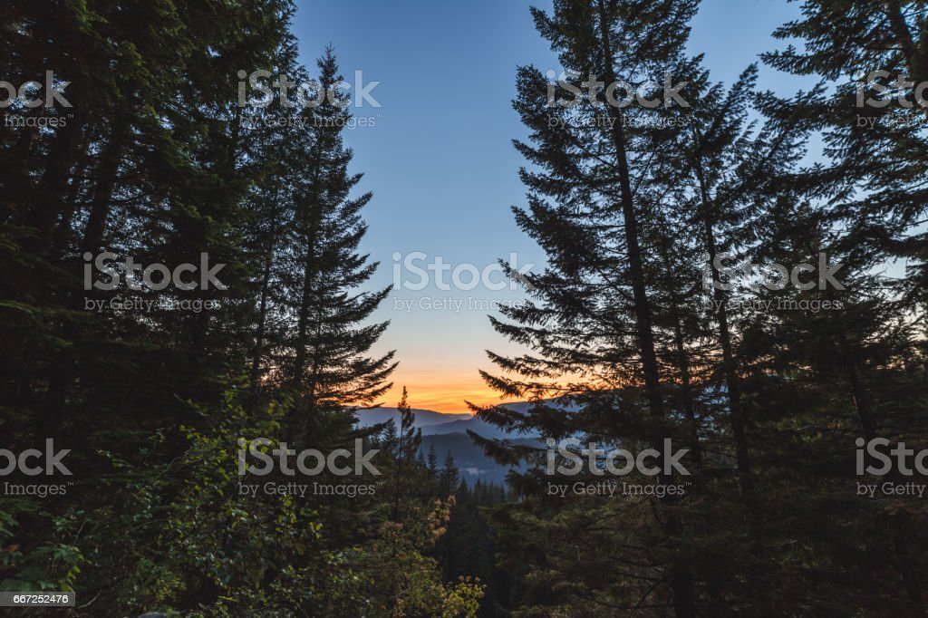 Beautiful Sunset in Remote Forest stock photo