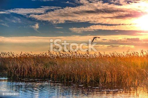 A beautiful sunset/dusk in the Danube Delta, Romania