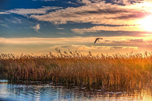 Beautiful sunset in the danube delta picture id515594902?b=1&k=6&m=515594902&s=612x612&w=0&h=jd7ofx0ufox pczqmwwbmlkug1zrl3xcoehgopqohtm=