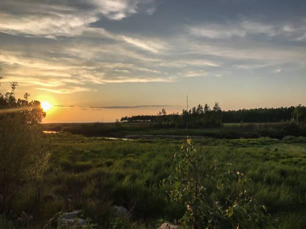 나무와 잔디와 아름 다운 일몰 풍경 스톡 사진