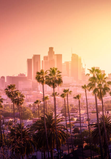 Beautiful sunset of Los Angeles downtown Beautiful sunset of Los Angeles downtown skyline and palm trees in foreground hollywood california stock pictures, royalty-free photos & images