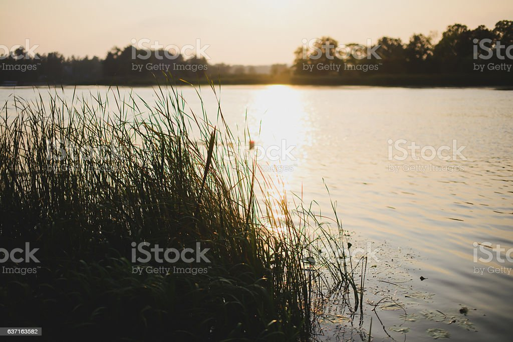 beautiful sunset on a lake with reeds stock photo