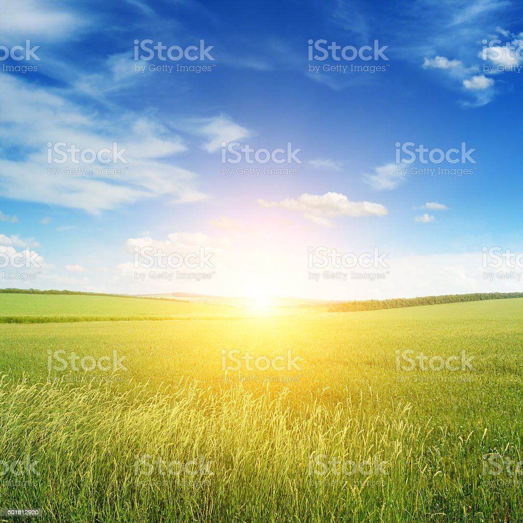 Beautiful sunset on green field stock photo
