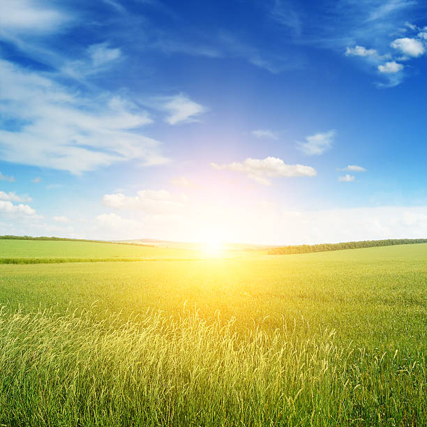 Image result for sunny sky and field