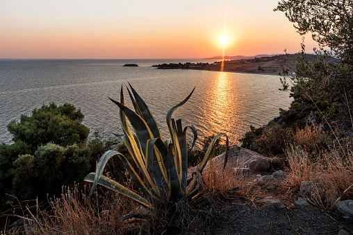 Sunset over calm sea with bicolor agave plant in sight. Sunset - Sunrise seascape with gentle \n\nwaves in calm water