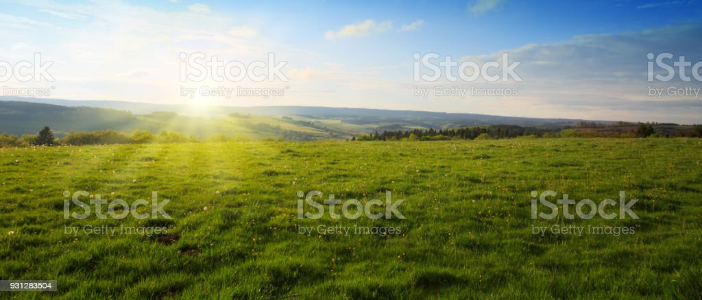 Beautiful sunset over the green spring field stock photo