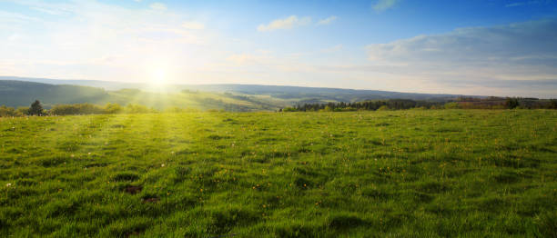 beautiful sunset over the green spring field - meadow stock pictures, royalty-free photos & images