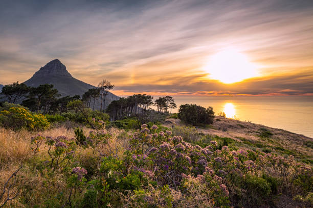 Beautiful sunset over the ocean and Lion's head mountain view from Signal hill in Cape Town stock photo
