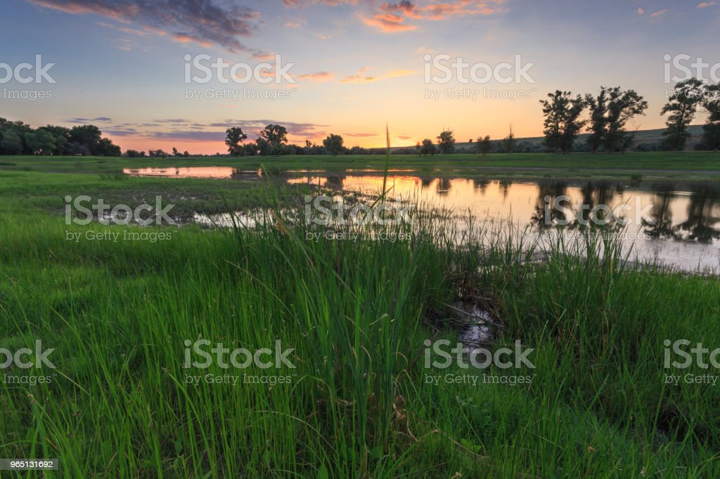 Beautiful sunset sky, the trees are reflected in the water of the lake, in the foreground green grass zbiór zdjęć royalty-free
