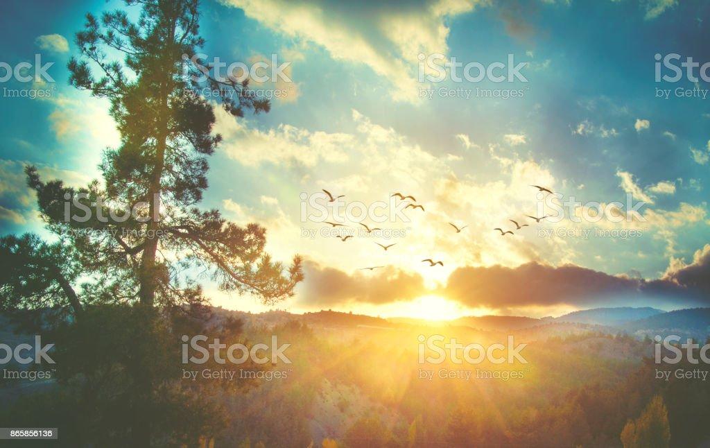 Beau ciel coucher de soleil avec des oiseaux photo libre de droits