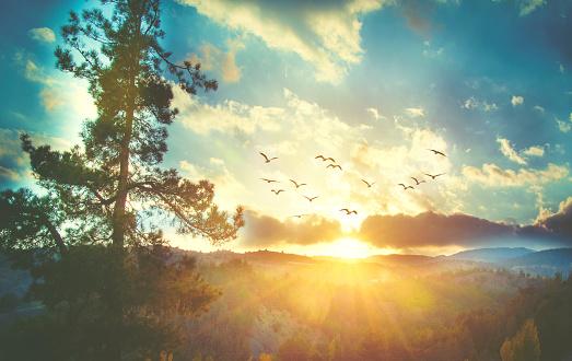 Beautiful sunset sky with birds