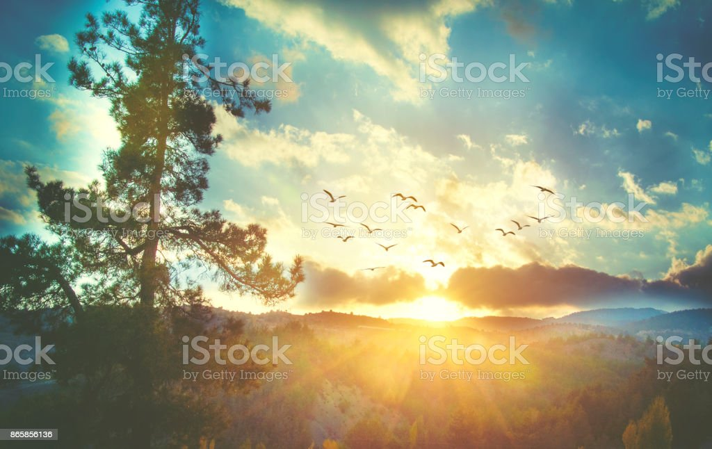 Beautiful sunset sky with birds stock photo