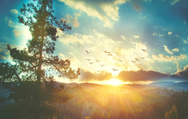 beautiful sunset sky with birds - bird stock photos and pictures