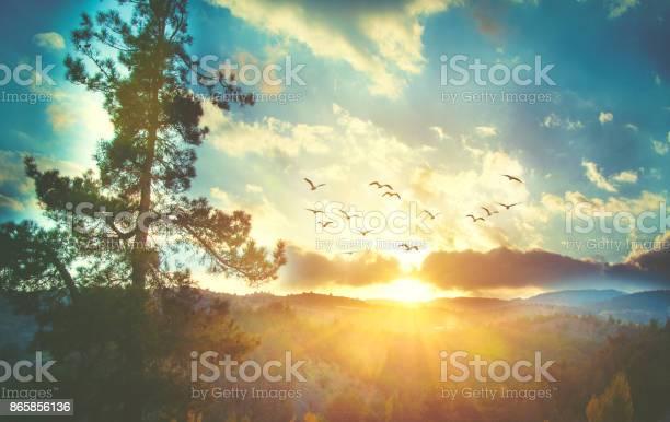 Photo of Beautiful sunset sky with birds