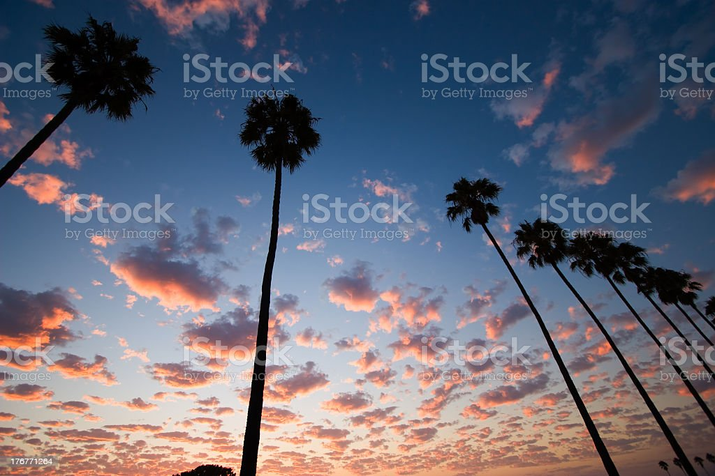 Beautiful sunset sky with palm trees stock photo