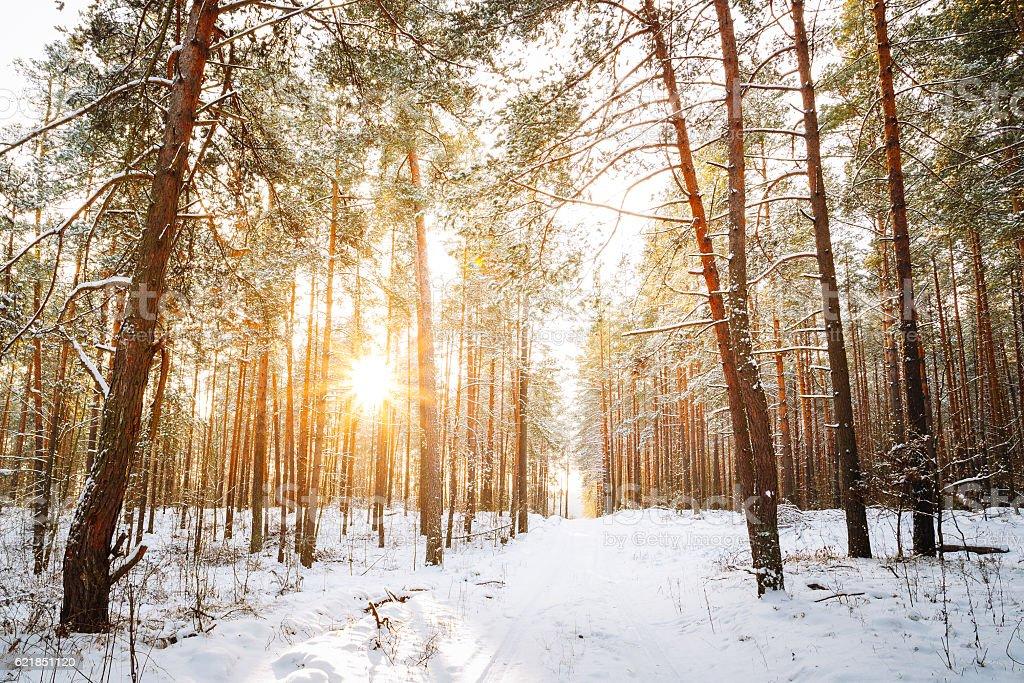 Beautiful Sunset Sunrise Sun Sunshine In Sunny Winter Snowy stock photo