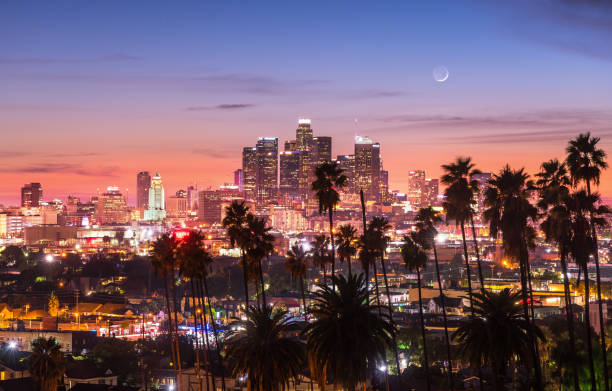 Beautiful sunset through the palm trees, Los Angeles, California. stock photo