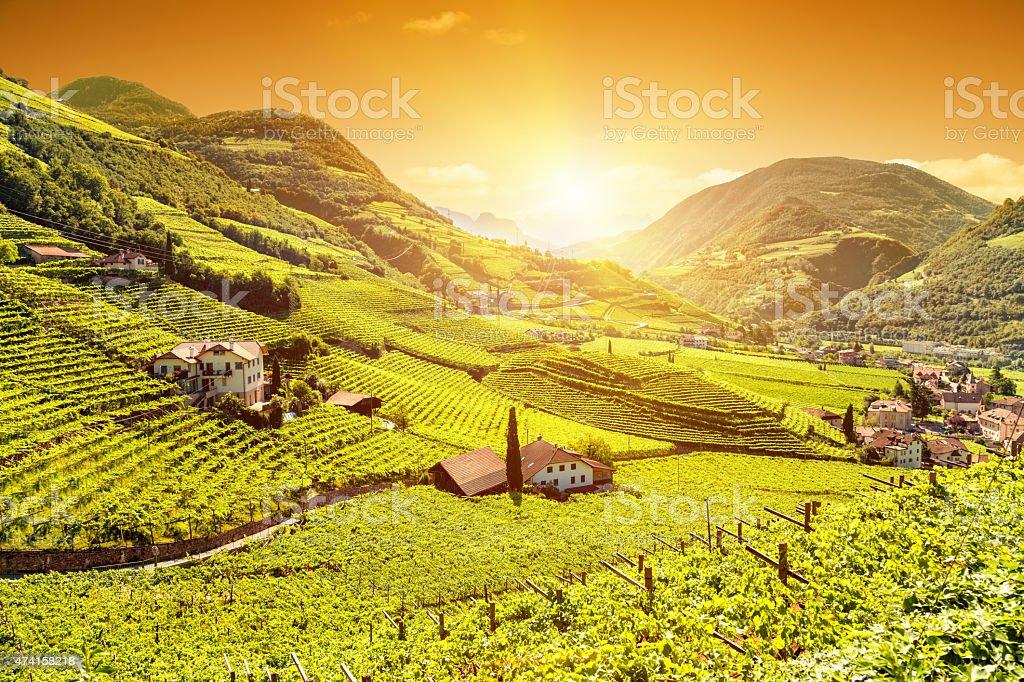 Schönen Sonnenuntergang über einem Weinberg in Italien – Foto