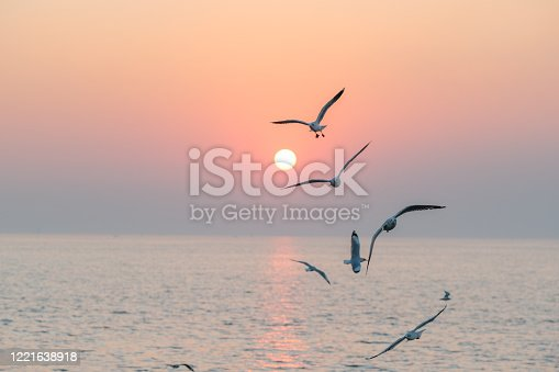 Beautiful sunset with flock of seagulls flying over the sea. Seagulls in the clouds of blue sky. Seagull flying in the blue sky. seagull is flying in the sky. Seagull flying sky.