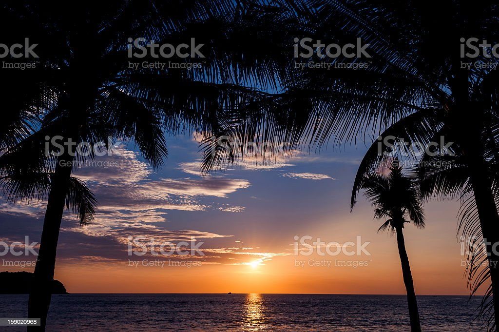 Beautiful sunset with palms in foreground royalty-free stock photo