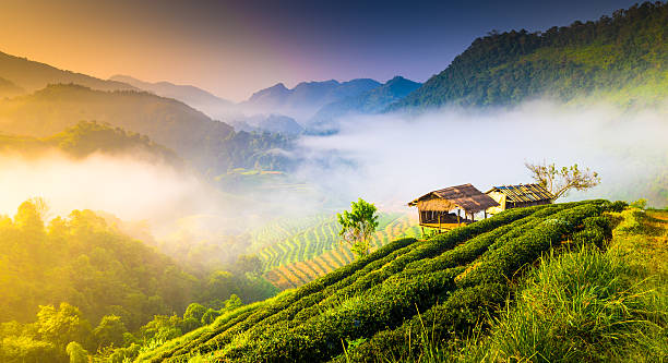 Beautiful sunshine at misty morning mountains . Beautiful sunshine at misty morning mountains at north thailand chiang mai province stock pictures, royalty-free photos & images