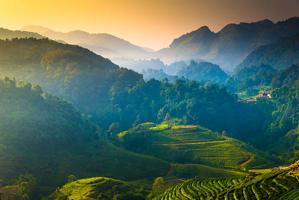 Beautiful sunshine at misty morning mountains . Beautiful sunshine at misty morning mountains . chiang mai province stock pictures, royalty-free photos & images