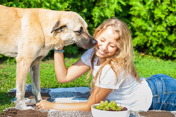 Beautiful teenager girl with a cute dog on a grass, picnic stock photo