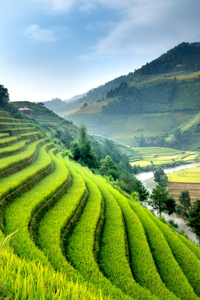 Beautiful terraced rice paddy field and mountain landscape in Mu Cang Chai. Rice is still green and spread across the mountains in Mu Cang Chai, Vietnam stock photo