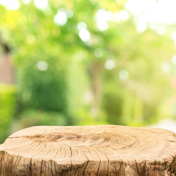 Beautiful texture of old tree stump table top on blur green garden farm background stock photo