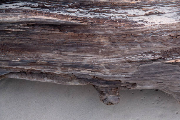Beautiful texture of the old sea washed tree trunk stock photo