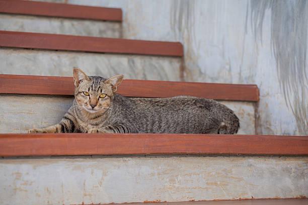 Beautiful thai cat picture id502165088?b=1&k=6&m=502165088&s=612x612&w=0&h=qqi v9txja8epznp1t1n9qjkglbgttkewzvsknzcfwo=