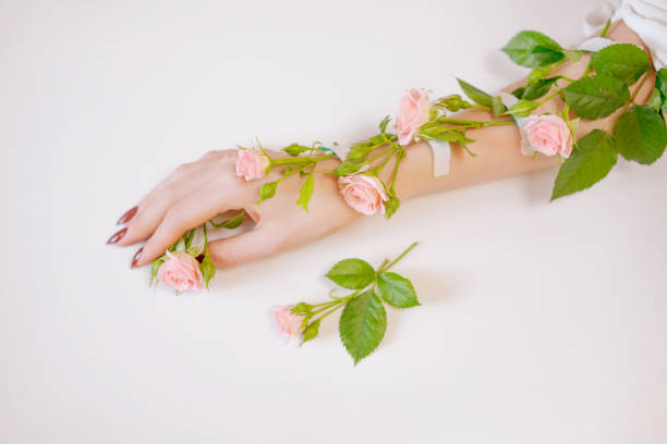 A beautiful thin female hand lies with rose flowers on a white background. The concept of healthy hand skin. stock photo