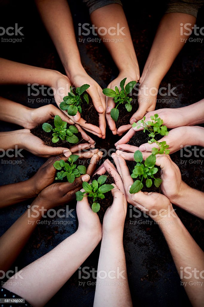 Beautiful things came from humble beginnings stock photo