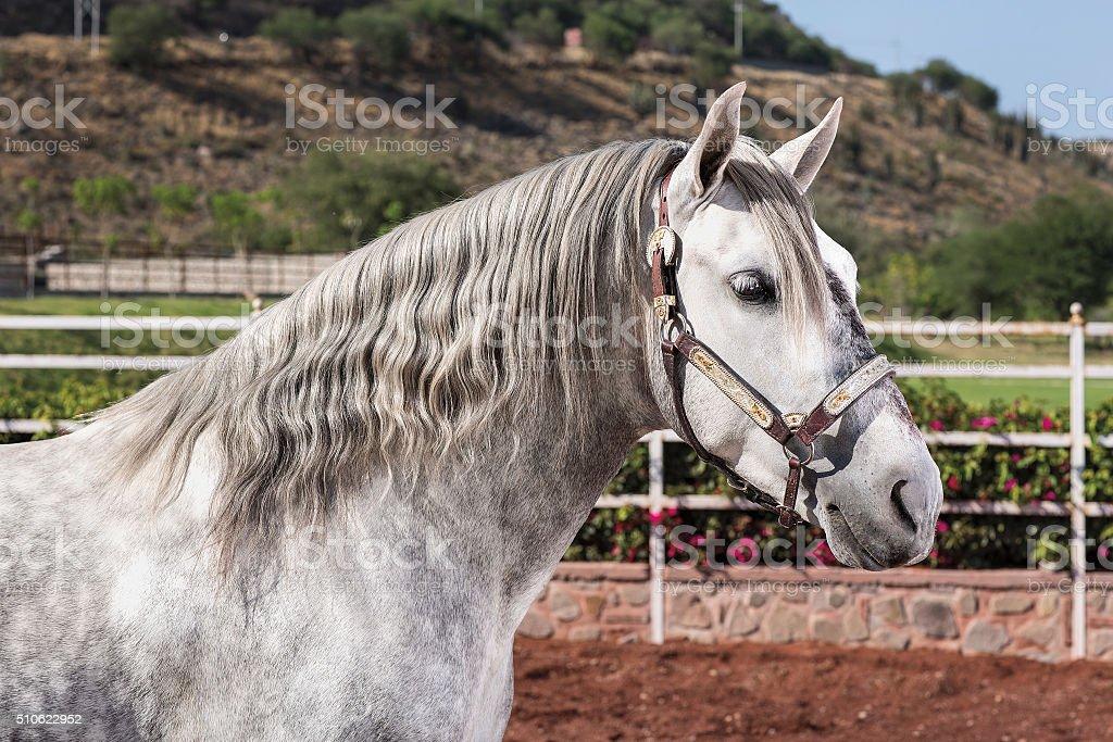 Beautiful Thoroughbred Horse Palomino Stock Photo Download Image Now Istock