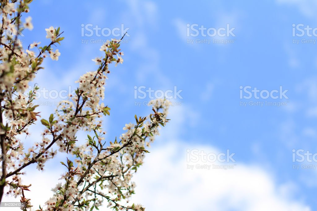 beautiful time of the year stock photo