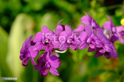 Beautiful time with purple orchid