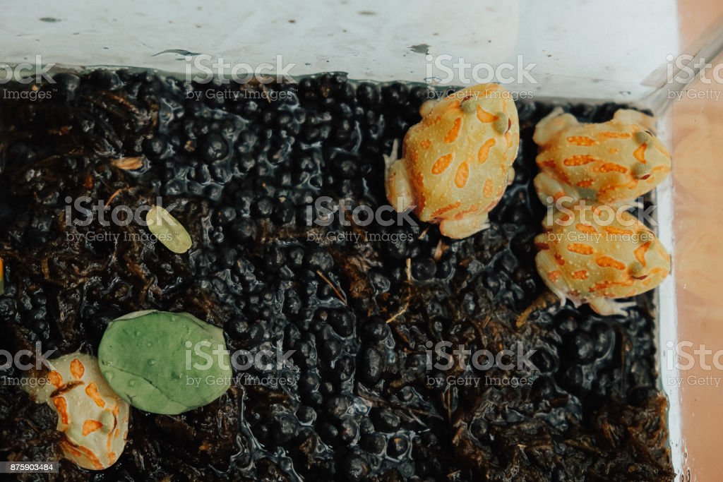 Beautiful Toads, selling in Aquarium Exhibition stock photo