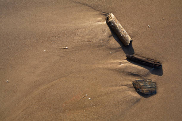 Beautiful top view of wave-smoothed pieces of wood on fine smooth Baltic sand beach stock photo