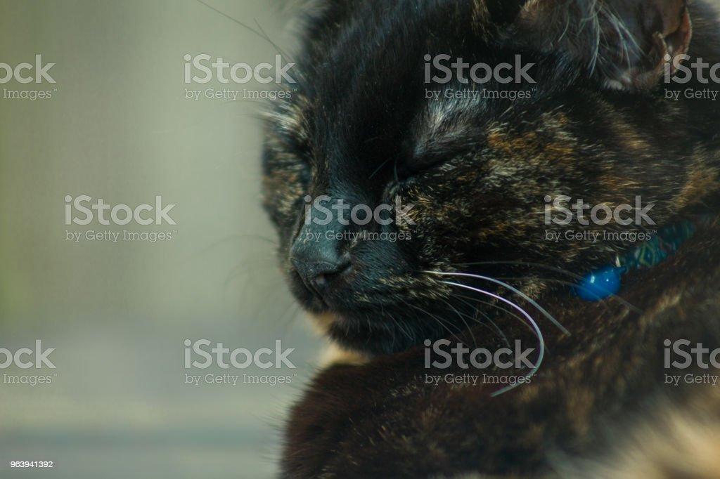 Beautiful Tortie - Royalty-free Animal Stock Photo