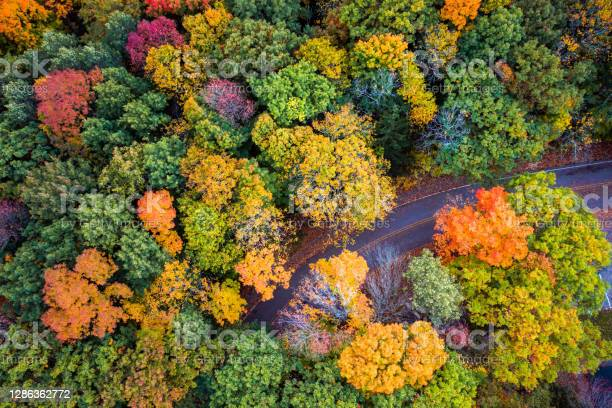 Photo of Beautiful travel aerial look down at a curved paved road partially obscured or hidden below fall or autumn foliage as the green leaves  change to bright red, yellow and orange colors in Wisconsin.