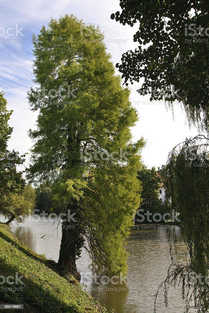 아름다운 나무 Riverside - 로열티 프리 0명 스톡 사진